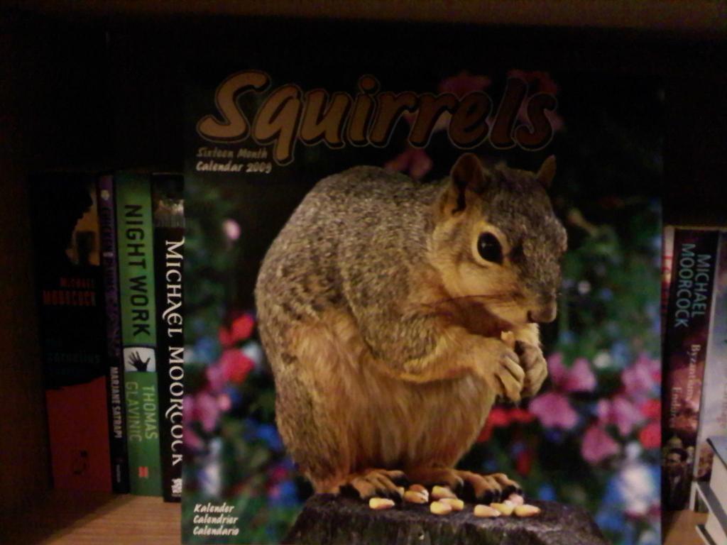 Nutty Squirrel Porno june 16 book porn…and squirrel porn   vaguely borgesian